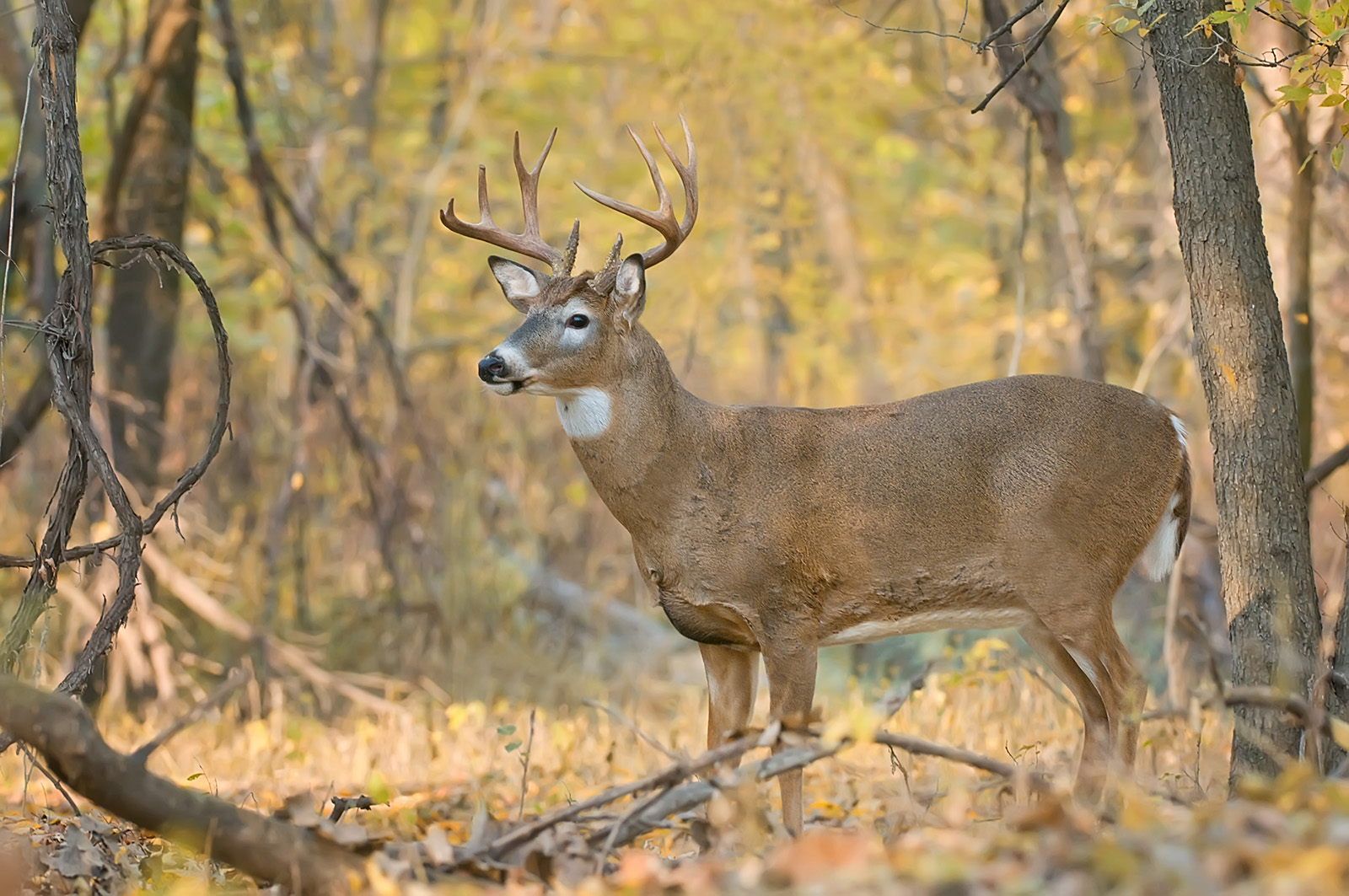 11 pointer in the valley fall.SLIDESHOW