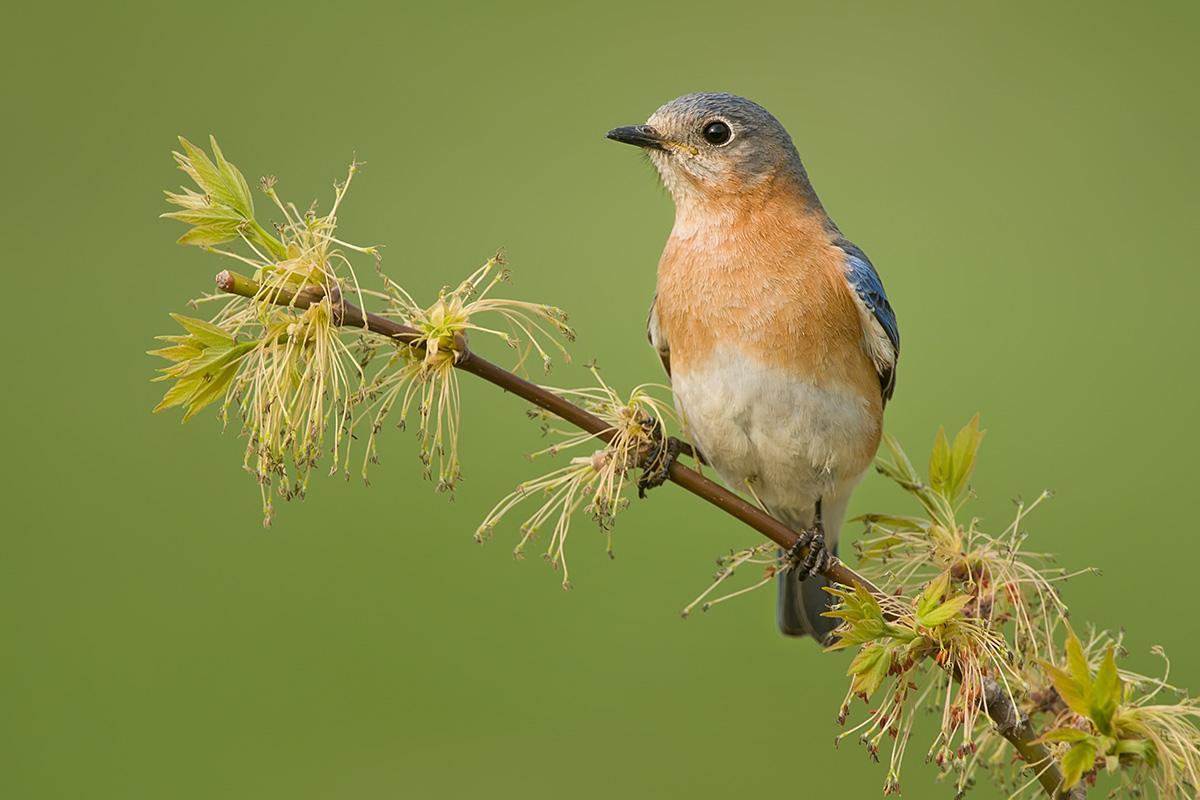 Bluebird FM on new growth SLIDESHOW