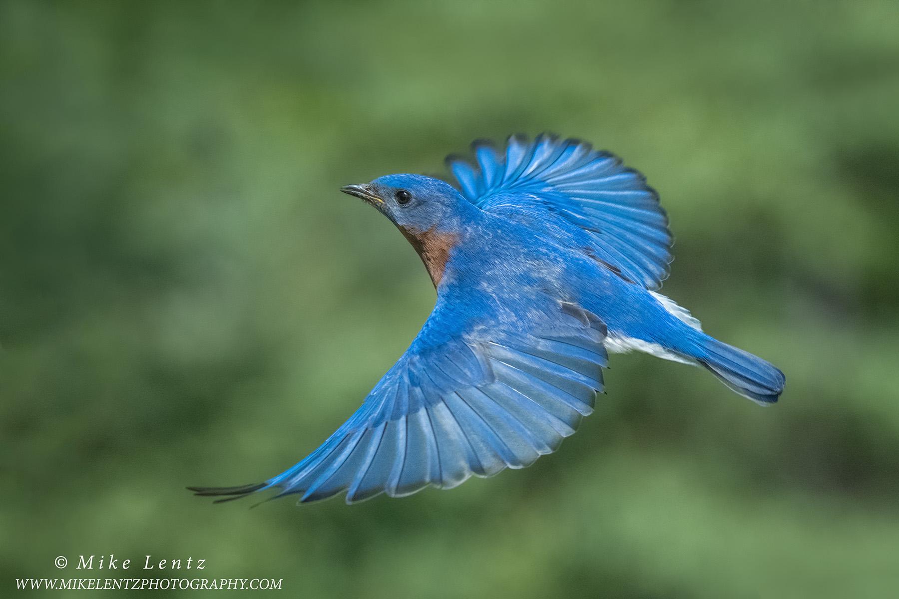 Bluebird upward flightPS2