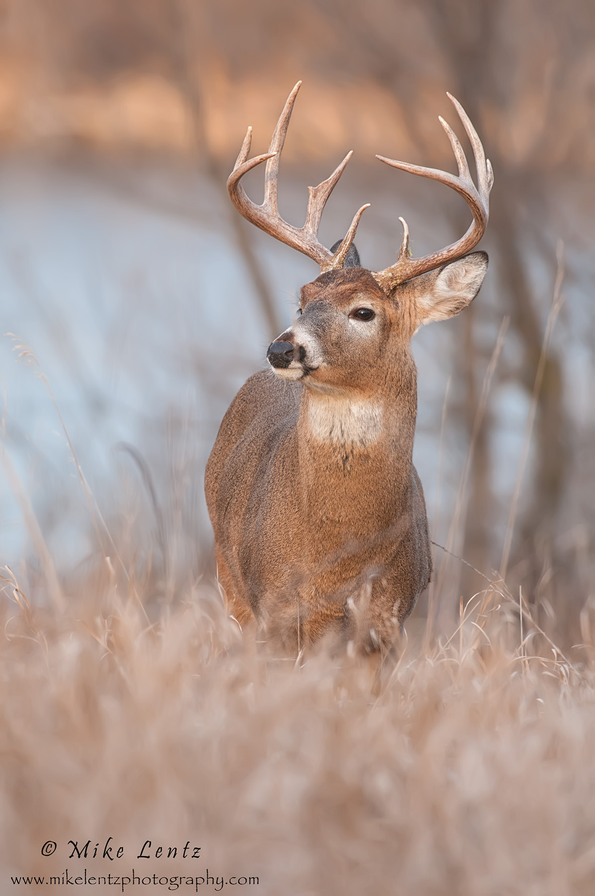 Buck near lake verticle