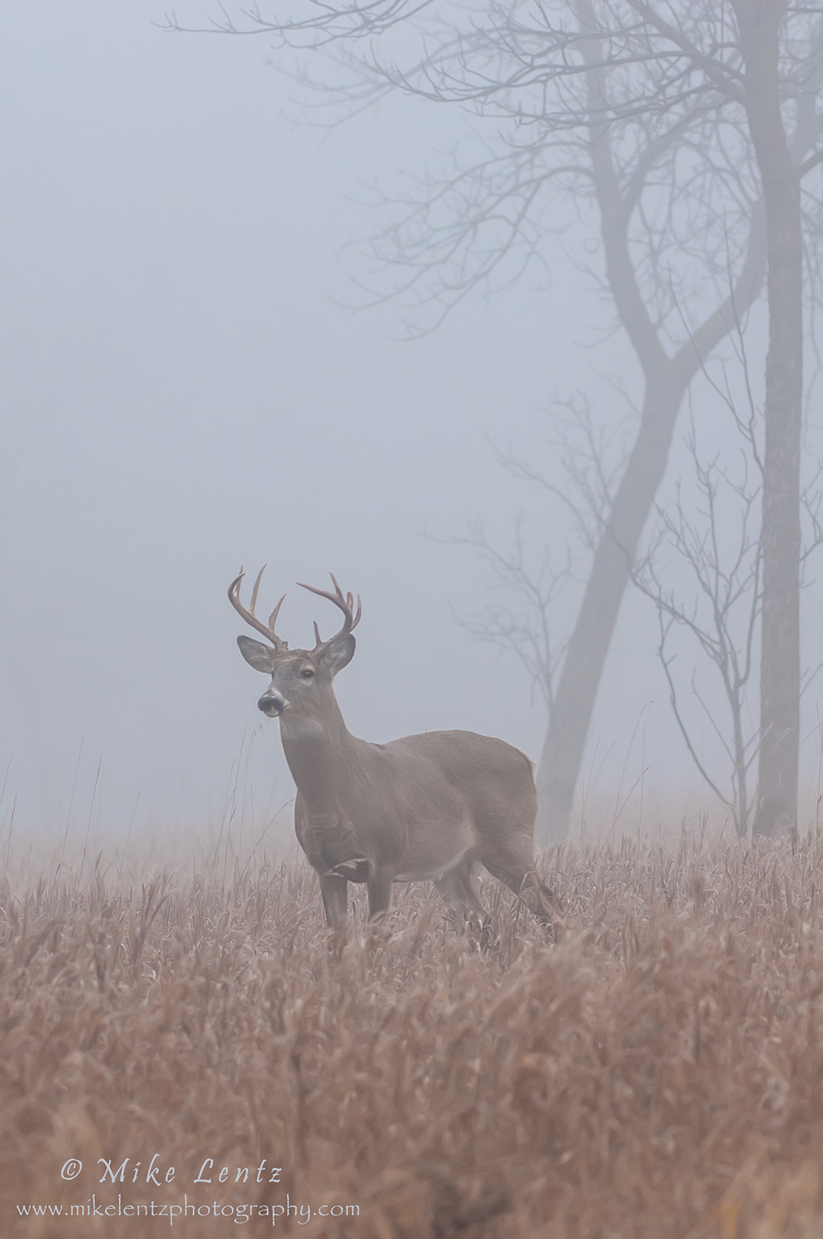 Buck verticle in heavy fog