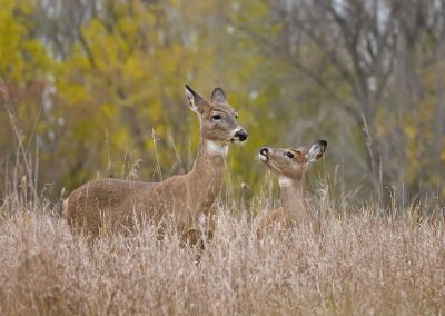 Deer love SLIDESHOW