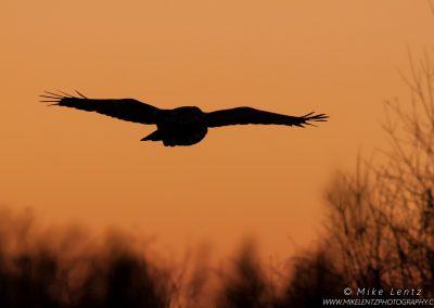 GGO sunset flightPS2