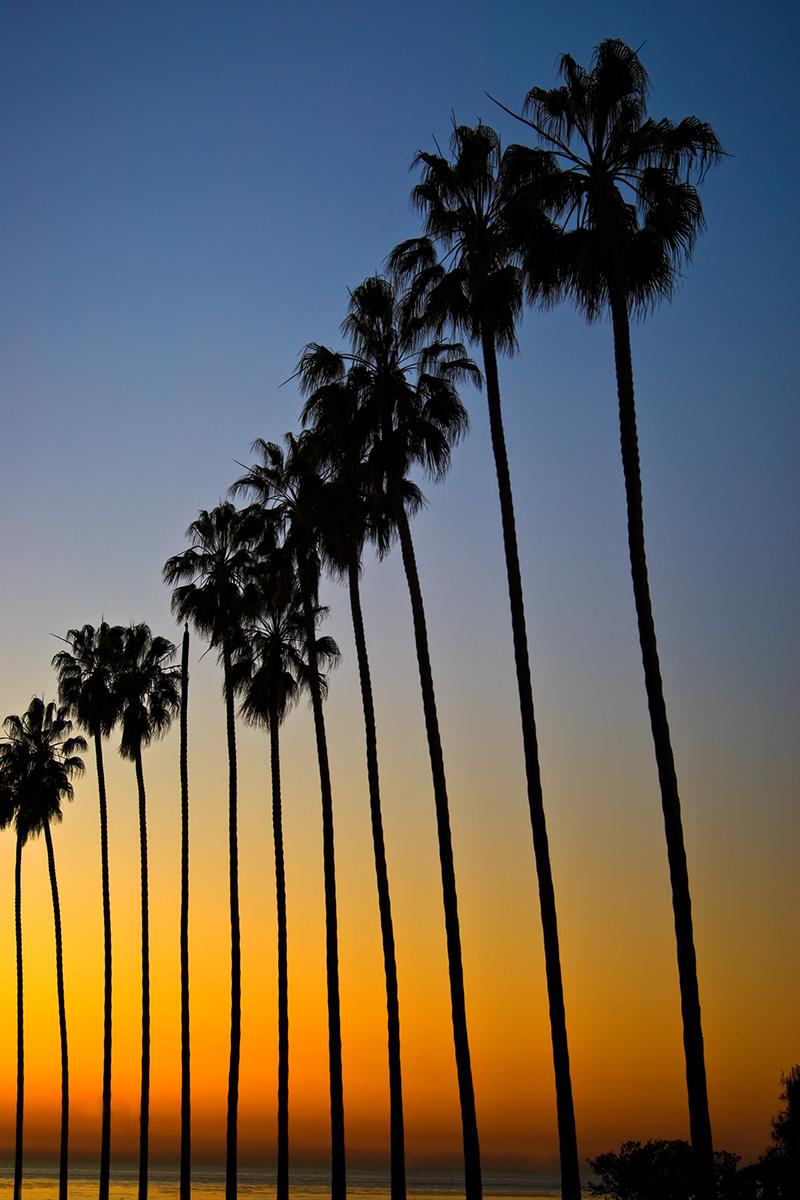 LaJolla Palms