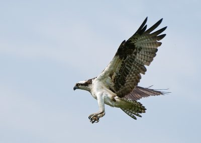 Osprey landing SLIDESHOW
