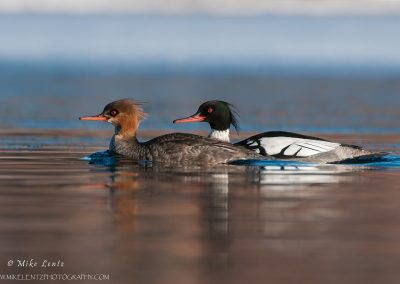 RBM couple swimming